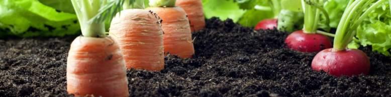 veg-growing-banner